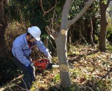 樹木の伐採作業