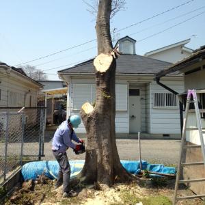 埼玉県深谷市木の伐採