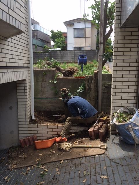渋谷区伐根