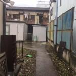川崎市シュロの木とツタの伐採撤去