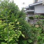 府中市庭木と庭石の撤去作業
