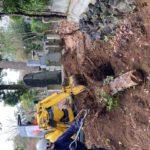 港区青山霊園伐採、伐根、整地作業