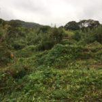 神奈川県葉山草刈作業